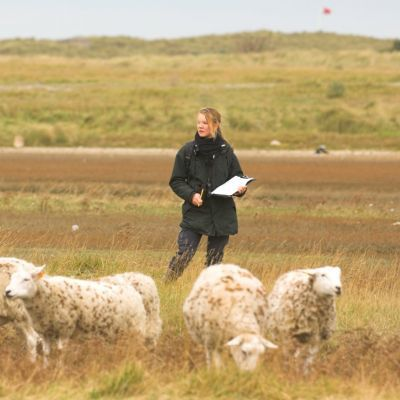 Monitoring van schapenbegrazing - Yves Adams